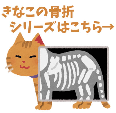 猫の骨折シリーズ