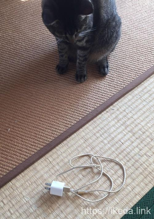タフネスケーブルを見た猫達の反応